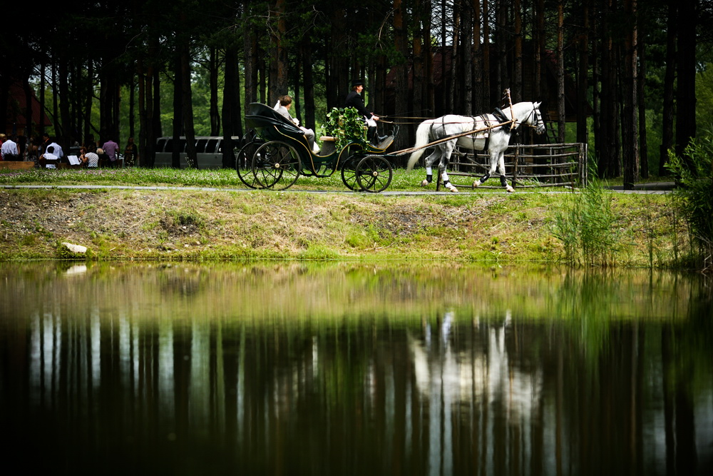 Wedding and horse